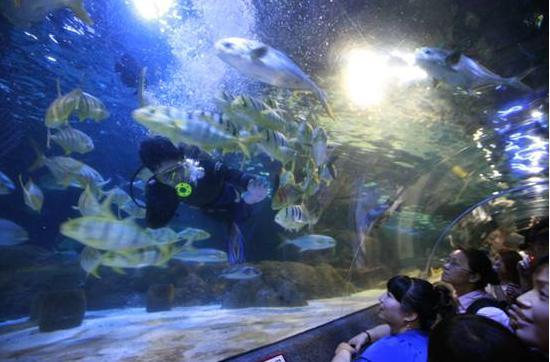 人鱼跳舞的感觉啊.哈哈,这些鱼跟聚会一样,一群一群.