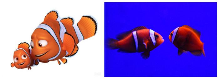 鳐鱼创意设计海报