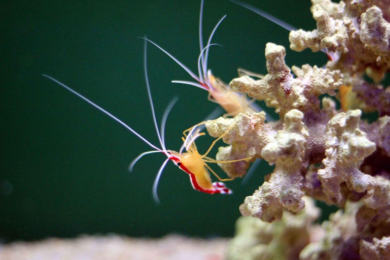 奇幻海洋 | 厉害了word小妖精!细数亚亚家那些超美的海洋精灵